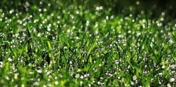 Trakya'da yağmur sonrası çiftçiler hangi işlemleri uygulamalıdır?