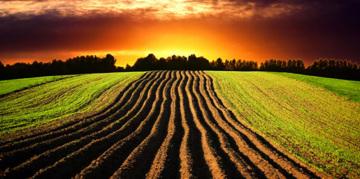 Türkiye, Afrika'da tarım arazileri kiralıyor!